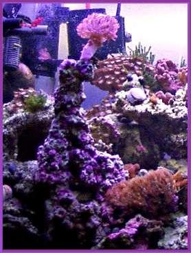 how to stop algae growth in aquarium